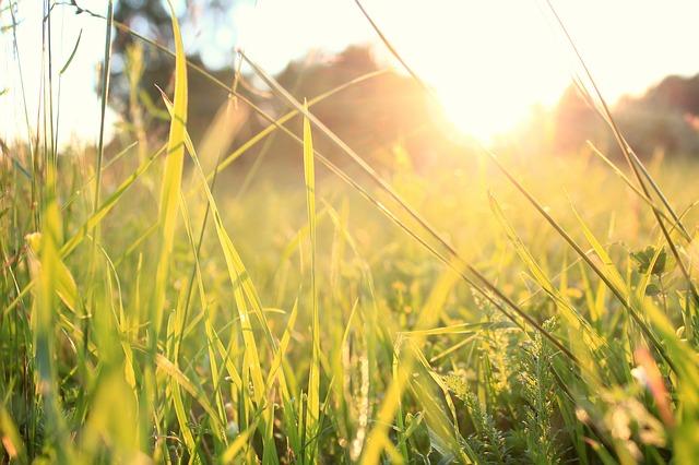 grass-828223_640