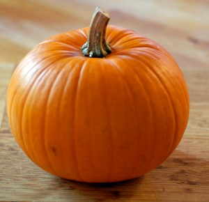 how-to-grow-pumpkins