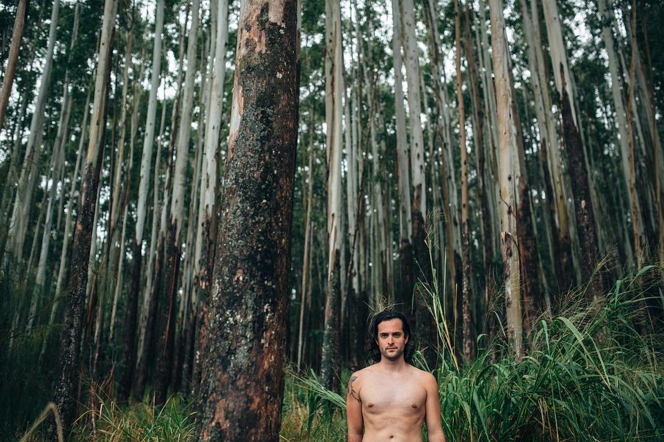 jungle-1209152_960_720