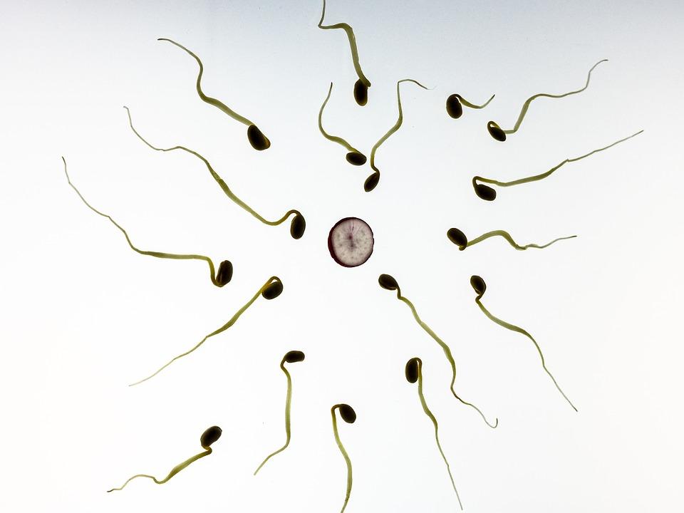 sperm-956480_960_720