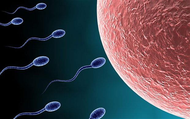 sperm_1790713b